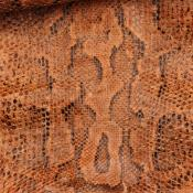 1968.10.99 (Snake, boa constrictor) image